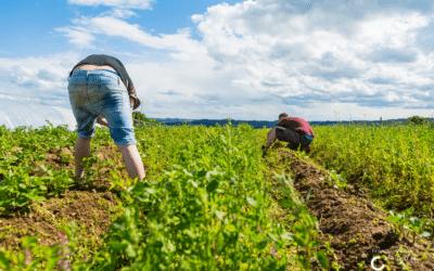 L'accueil social à la ferme et rural en période de pandémie : mise à jour de novembre 2020