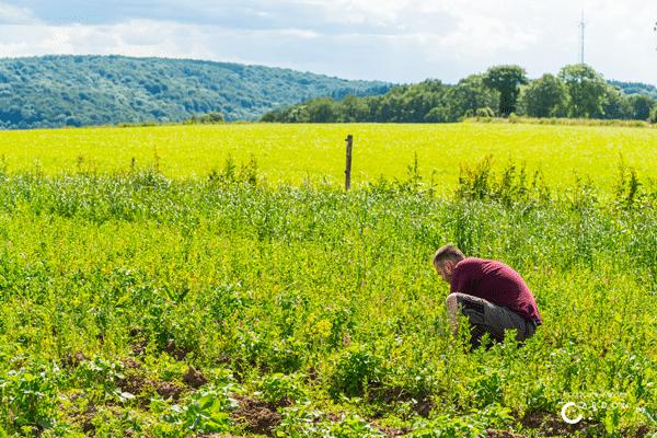 Agriculture-sociale-Wallonie-Grande-chevee
