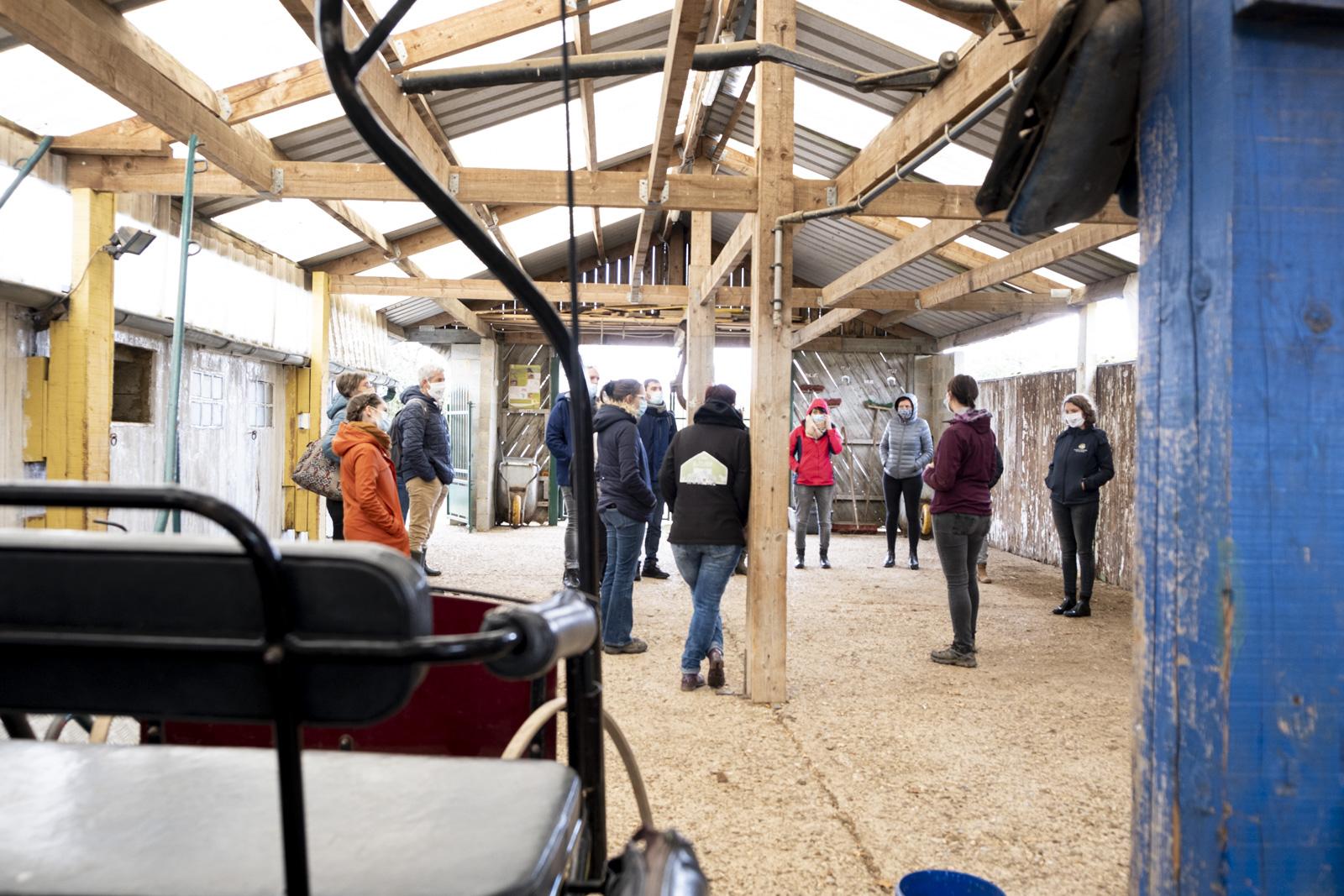 AGRICULTURE_SOCIALE_Visite_de_ferme_Asinerie_de_l_O